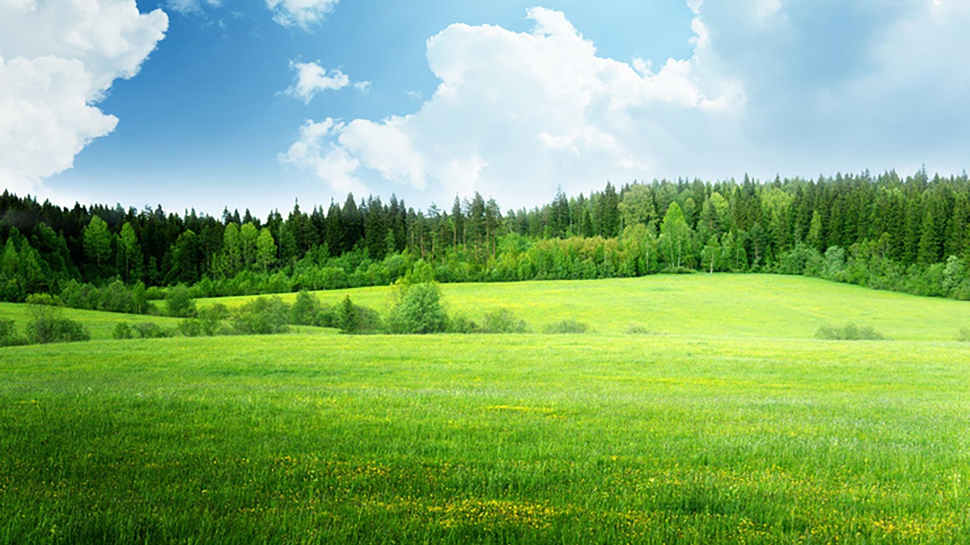 Saftig grüne Landschaft